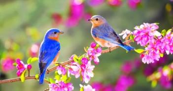 Những hình ảnh thiên nhiên về mùa xuân làm ngất ngây lòng người 3