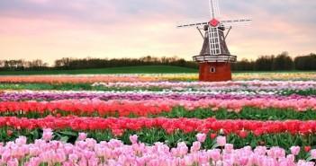 Bộ sưu tập những hình ảnh thiên nhiên về mùa xuân lãng mạn và thơ mộng 12