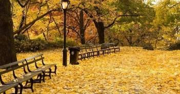 Những cảnh đẹp thiên nhiên lãng mạn và đầy quyến rũ với cảnh đẹp mùa thu 4