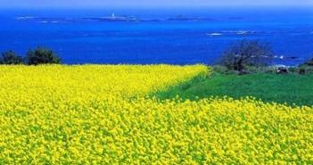 Những cảnh đẹp thiên nhiên lãng mạn và thơ mộng làm đốn tim người xem 4