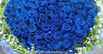 Những hình ảnh hoa hồng xanh tặng 20-10 ấn tượng và lãng mạn nhất 1