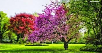Những hình ảnh thiên nhiên đẹp ấn tượng và đầy thơ mộng dành cho máy tính 1