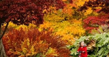 Những hình ảnh thiên nhiên mùa thu đẹp thơ mộng và vô cùng lãng mạn 9