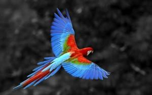Bộ sưu tập các loài chim đẹp và ấn tượng nhất thế giới 2