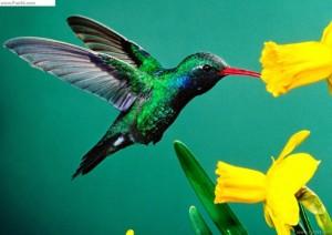 Bộ sưu tập các loài chim đẹp và ấn tượng nhất thế giới 3