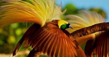 Bộ sưu tập các loài chim đẹp và ấn tượng nhất thế giới 5