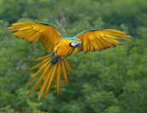 Bộ sưu tập các loài chim đẹp và ấn tượng nhất thế giới 6