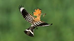 Bộ sưu tập các loài chim đẹp và ấn tượng nhất thế giới 8