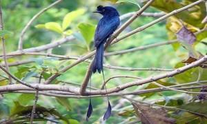Bộ sưu tập các loài chim đẹp và ấn tượng nhất thế giới 9