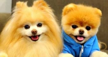 Bộ sưu tập những hình ảnh động vật dễ thương và đáng yêu nhất 10