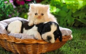 Bộ sưu tập những hình ảnh động vật dễ thương và đáng yêu nhất 5