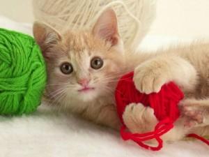 Bộ sưu tập những hình ảnh động vật dễ thương và đáng yêu nhất 7