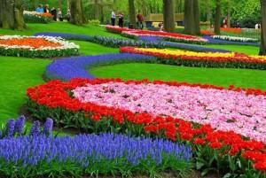 Bộ sưu tập những vườn hoa tulip sặc sỡ và ấn tượng nhất 10