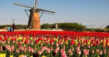 Bộ sưu tập những vườn hoa tulip sặc sỡ và ấn tượng nhất 2