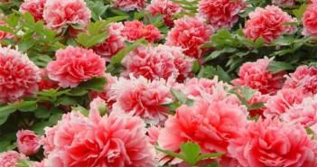 Hình ảnh những đóa hoa đua nhau khoe sắc làm mê mẩn lòng người 9
