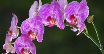 Hoa lan đẹp dễ trồng nhất tại Việt Nam cho người mới chơi lan 22