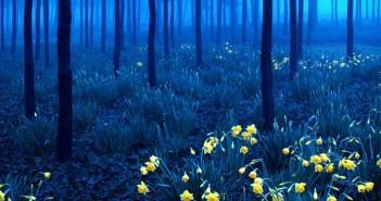 Những cảnh đẹp thiên nhiên thơ mộng và lãng mạn nhất 3
