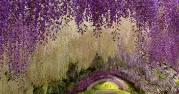 Những cảnh đẹp thiên nhiên vô cùng tuyệt vời và ấn tượng 2