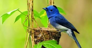 Những hình ảnh các loài chim đẹp và ấn tượng nhất dành cho máy tính 1