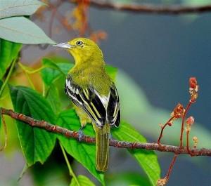 Những hình ảnh các loài chim đẹp và ấn tượng nhất dành cho máy tính 2