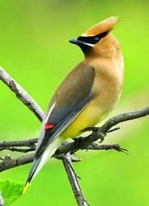 Những hình ảnh các loài chim đẹp và ấn tượng nhất dành cho máy tính 4