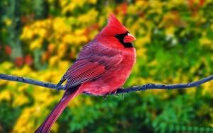 Những hình ảnh các loài chim đẹp và ấn tượng nhất dành cho máy tính 6