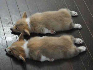 Những hình ảnh cặp đôi động vật hài hước và đáng yêu nhất 10