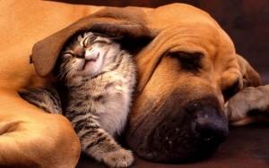 Những hình ảnh cặp đôi động vật hài hước và đáng yêu nhất 2