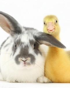 Những hình ảnh cặp đôi động vật hài hước và đáng yêu nhất 7
