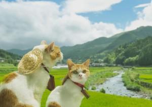 Những hình ảnh cặp đôi động vật hài hước và đáng yêu nhất 8