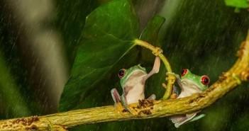 Những hình ảnh động vật đẹp khi những cơn mưa bất chợt 2