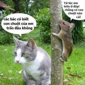 Những hình ảnh hài hước và những câu chế vui về động vật 3