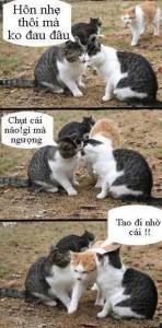 Những hình ảnh hài hước và những câu chế vui về động vật 5