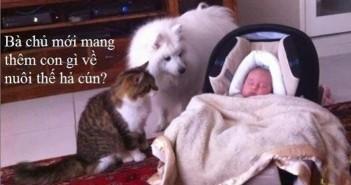 Những hình ảnh hài hước và những câu chế vui về động vật 7