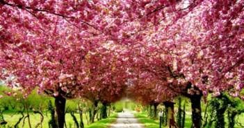 Những hình ảnh mùa xuân đẹp lãng mạn trên thế giới 3