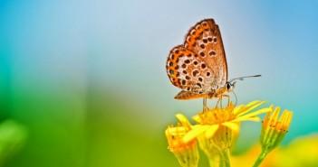 Những hình ảnh thiên nhiên 3D đẹp ấn tượng dành cho hình nền máy tính 7