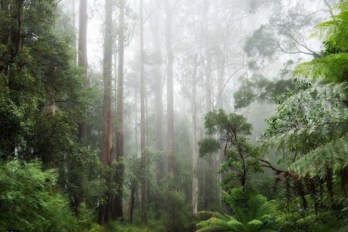 Những hình ảnh thiên nhiên đẹp bí ẩn và hoang dã nhất 10