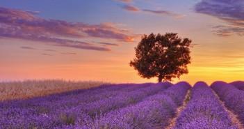 Những hình ảnh thiên nhiên đẹp và thơ mộng và sâu lắng nhất 5