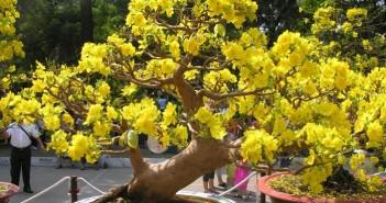 Những hình ảnh thiên nhiên về mùa xuân đẹp và lãng mạn nhất 2