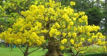 Cách chọn hoa - cây cảnh ý nghĩa dịp Tết Nguyên Đán 2