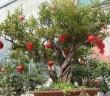 Hình ảnh các loại cây quả độc lạ chơi tết được ưa chuộng năm nay 6