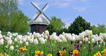 Hình ảnh cánh đồng hoa tulip đẹp rực rỡ và say đắm lòng người 2