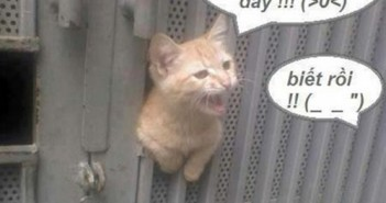 Hình ảnh chế hài hước vui nhộn vô đối với các chú mèo 33