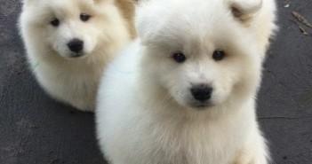 Hình ảnh những chú chó con vô cùng dễ thương và đáng yêu sẽ làm bạn thích thú 2