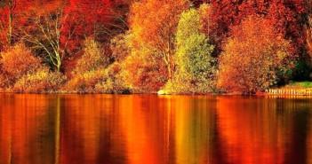Hình ảnh những khu rừng mùa thu phủ đầy lá vàng đẹp đến ngỡ ngàng 2