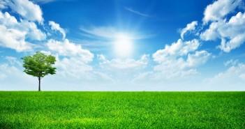 Hình ảnh những thảm cỏ xanh mướt sẽ khiến bạn muốn ngả mình trải nghiệm 4