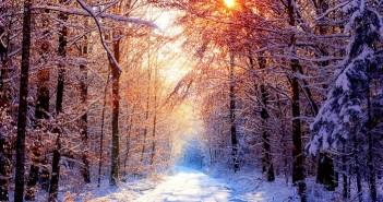 Hình ảnh rừng cây mùa đông tuyết phủ trắng xóa vô cùng lãng mạn 7