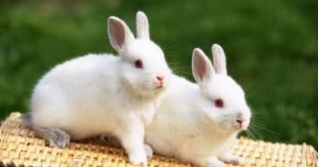 Hình nền những chú thỏ con vô cùng đáng yêu và ngộ nghĩnh mà bạn sẽ thích ngay 9
