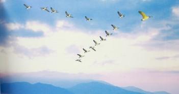 Tuyển tập hình ảnh đàn chim bay vô cùng ấn tượng và thú vị 4