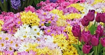 Tuyển tập hình ảnh hoa xuân đẹp tuyệt vời và vô cùng thơ mộng 7